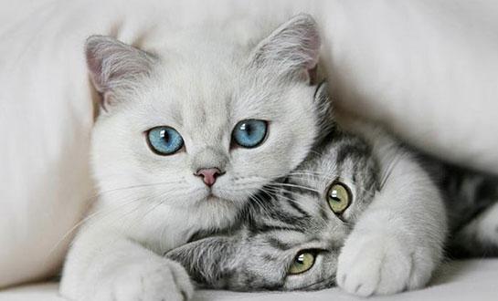 kediler ile ilgili görsel sonucu